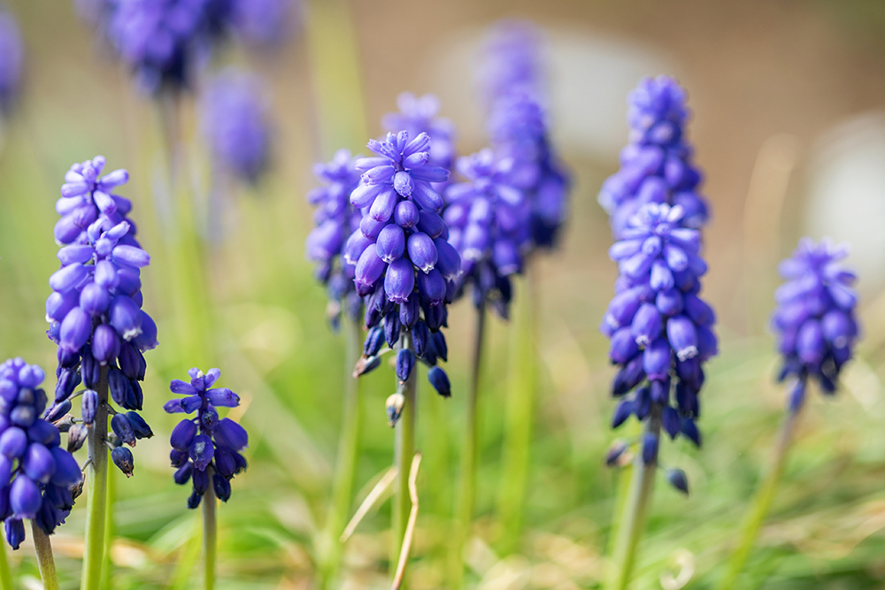 Three Gorgeous Early-Spring Flower Species You Need to Meet
