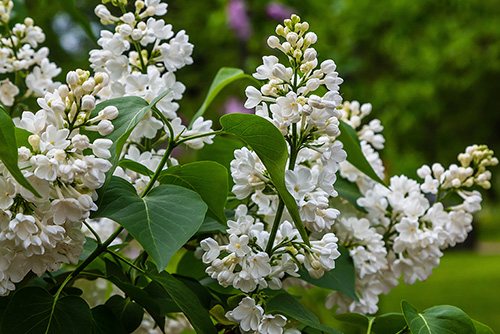 Nine Exotic Trees That Thrive In The Northeast